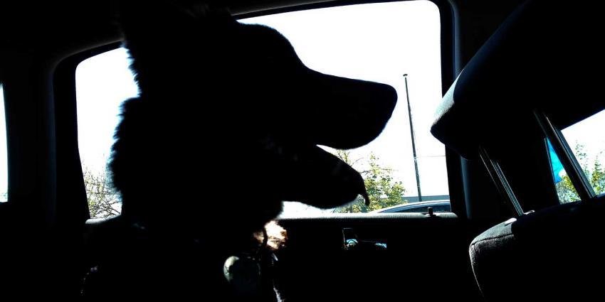 Niet betalend baasje moet zelf 10 dagen cel in voor herdershond in auto