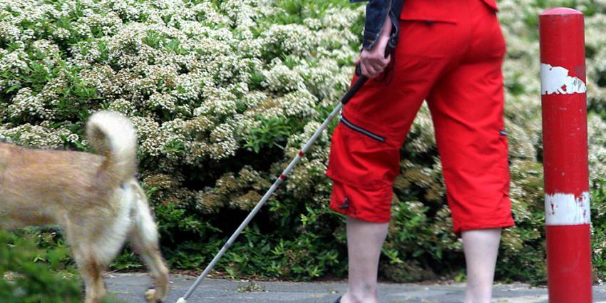 Foto van blinde vrouw met stok en hond   Archief EHF
