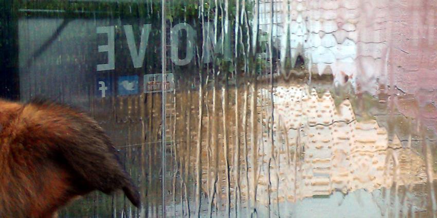 Foto van hond die schuilt in bushokje voor de regen | Archief EHF