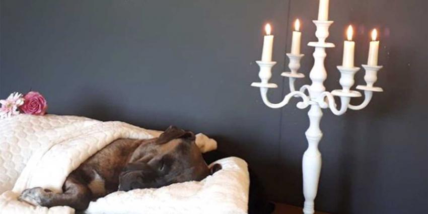 hond-crematie