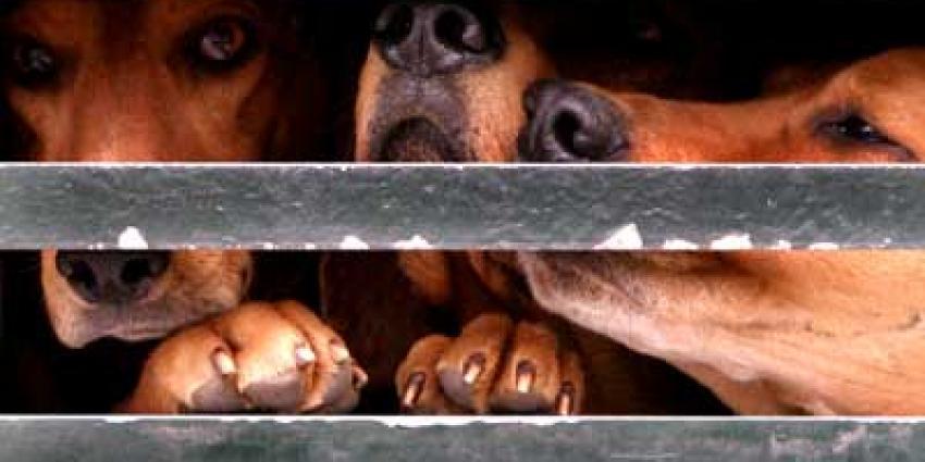 Foto van honden in hok | Archief EHF
