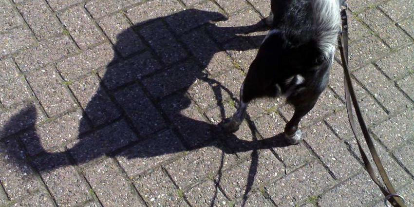 Foto van hond in de zon | Archief EHF