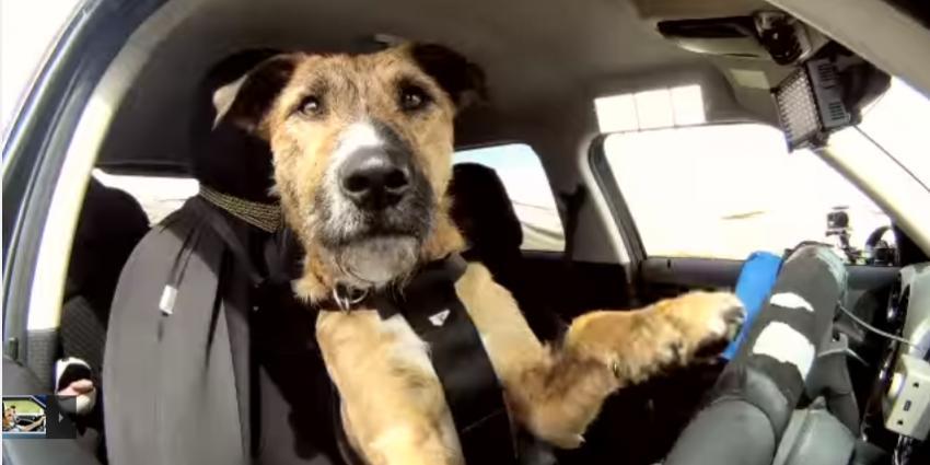Honden in warme auto's achtergelaten