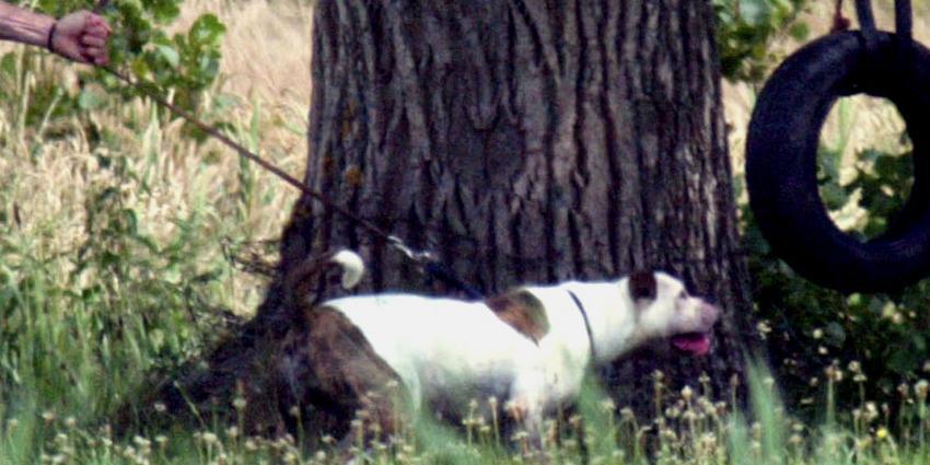 Politie schiet agressieve hond dood bij dorpsfeest