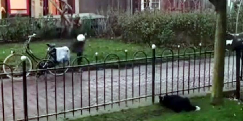 Hond 'misbruikt' voorbijgangers in zijn spel