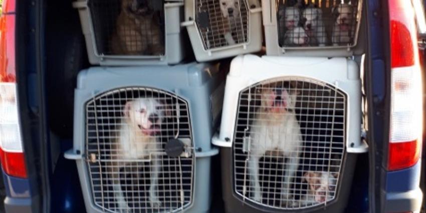 Maatregelen voor betere dierenwelzijn waaronder hondenpaspoort