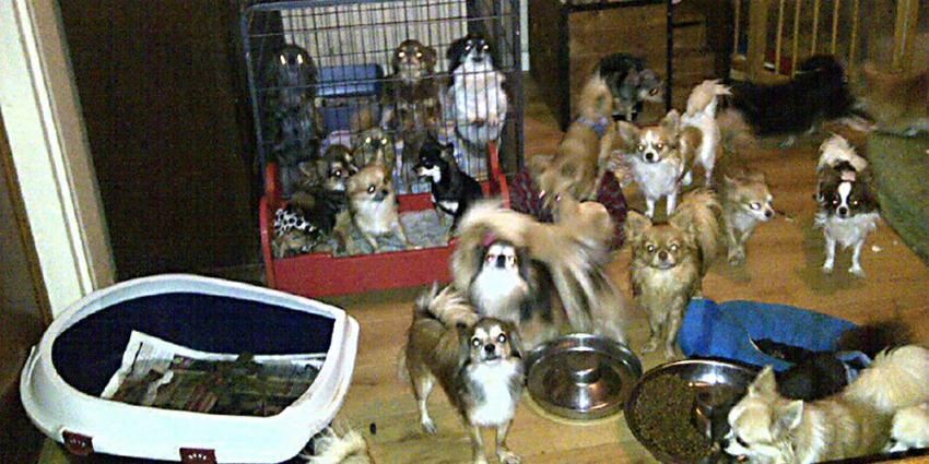 Foto van veel honden in woning | Politie