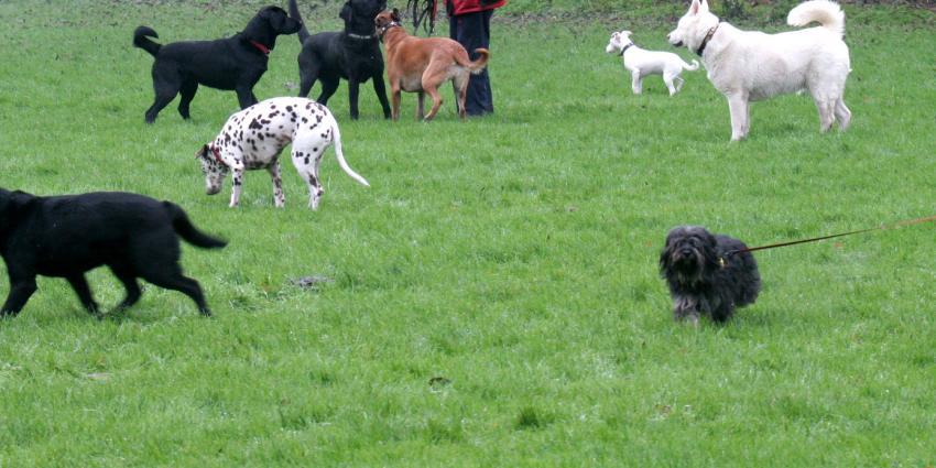 Loslopende hond door andere hondenbezitter doodgestoken