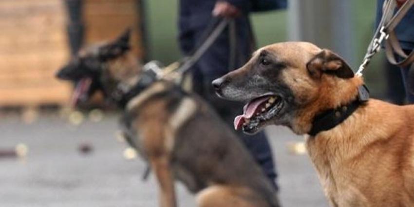 Politiehond helpt bij scheiden vechtende groepen