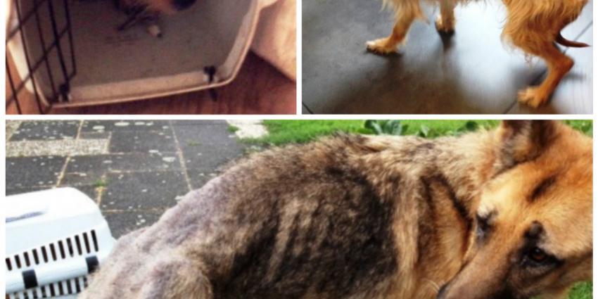 Honden in bewaring genomen na zeer zware verwaarlozing
