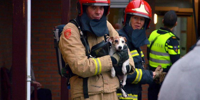 hondje-brandweerman