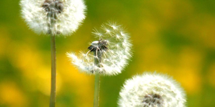 Slechte dagen voor hooikoortspatiënten