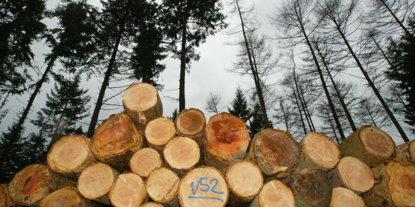 Nog veel fout hout in Nederland