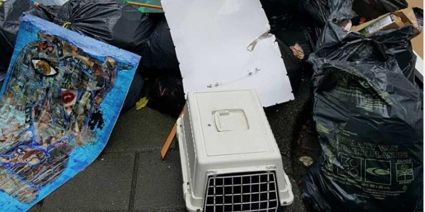 Katten gedumpt bij huisvuil in Amsterdam