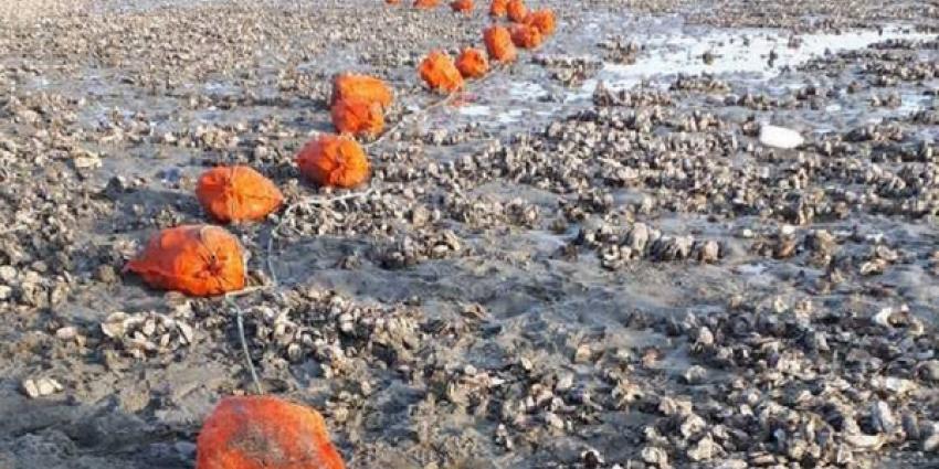 Beroepsvisser betrapt met 667 kilo illegaal geraapte oesters