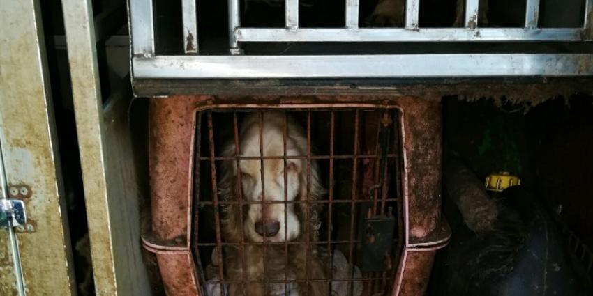 Dierenpolitie haalt 28 honden uit auto