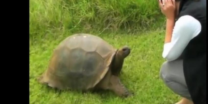 Oudste schildpad ter wereld heeft al jaren homeseksuele relatie