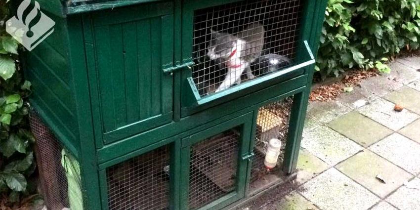 Kat met kittens in hok achtergelaten door vakantiegangers