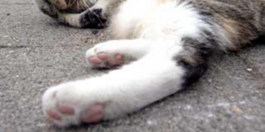 Foto van liggende kat | Archief EHF
