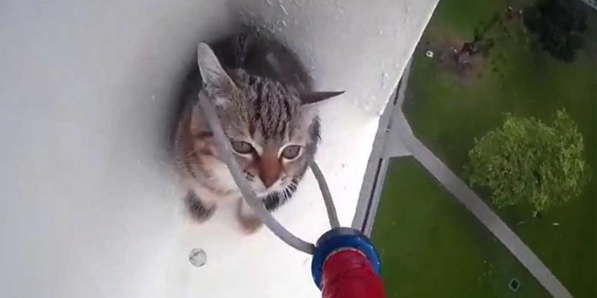 Jong katje gered van hoge richel op Dierendag