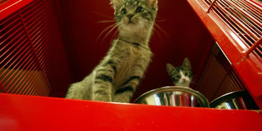 Stinkdieren en katten uit vervuilde woning gehaald