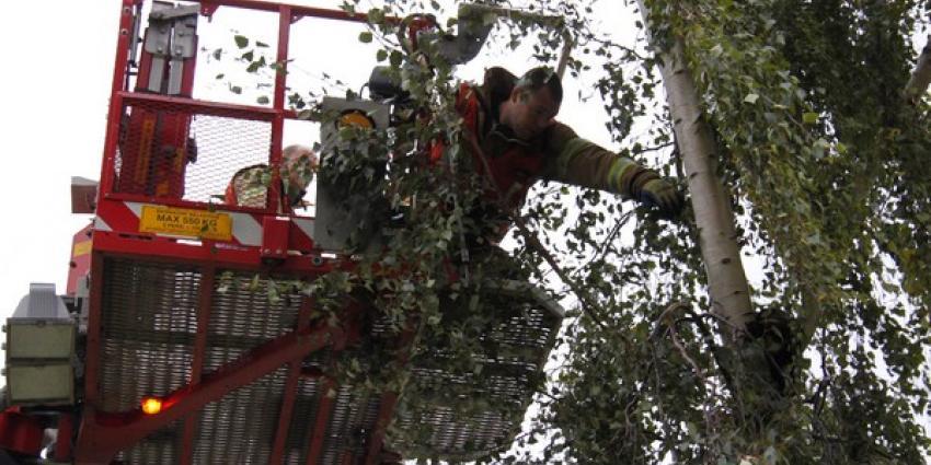Brandweer haalt kat uit de boom