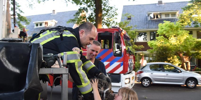 Poes in boom houdt brandweer Zeist even bezig