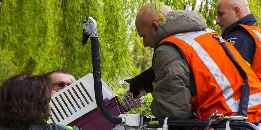 Brandweer redt kat uit boom in Boxtel