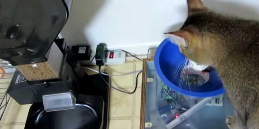 Huiskat moet 'werken' voor zijn dagelijkse maaltijd