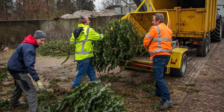 Aanzienlijk minder kerstbomen ingeleverd door kinderen in Vlaardingen