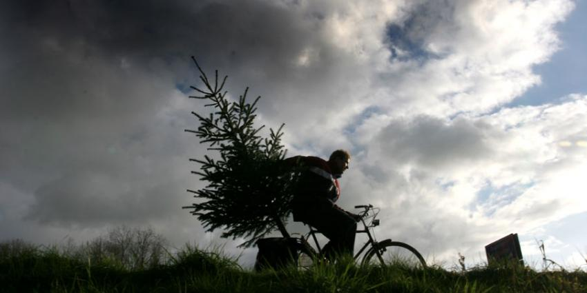 foto van kerstboom | fbf
