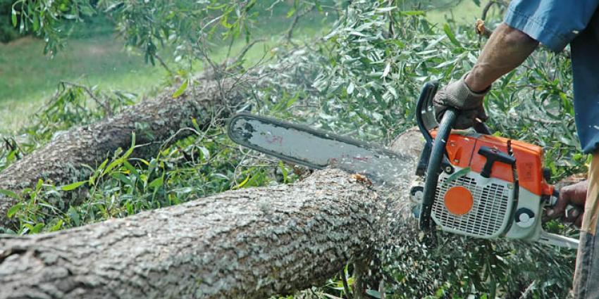 2500 fruitbomen omgezaagd door vandaal