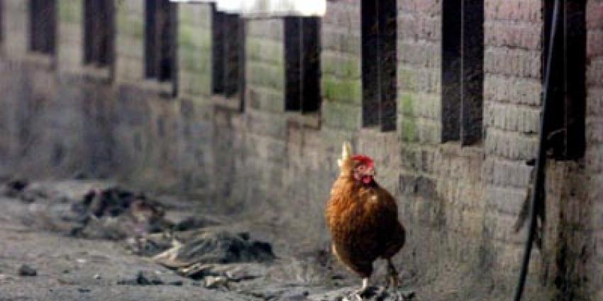 Ophokplicht vanwege vogelgriep blijft van kracht