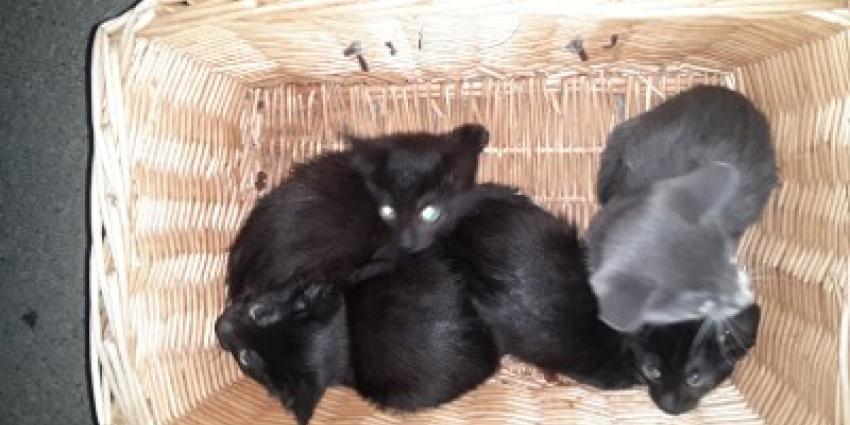 Voorbijgangers vinden vier gedumpte kittens, politzie zoekt getuigen