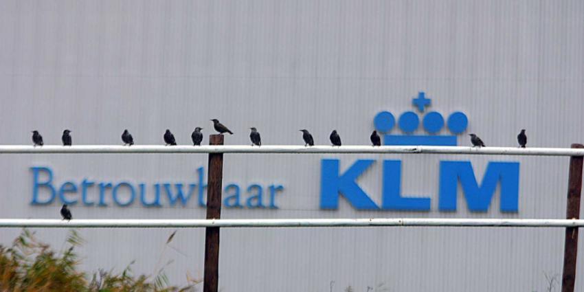 klm-hangar-vogels-betrouwbaar