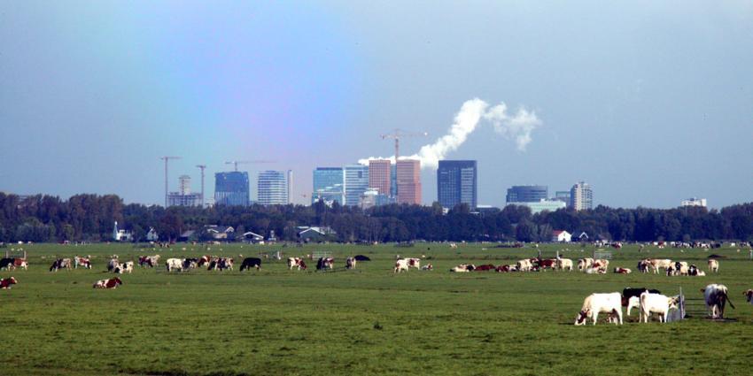 Meeste koeien staan buiten in West-Nederland