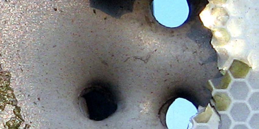 foto van kogels | fbf archief