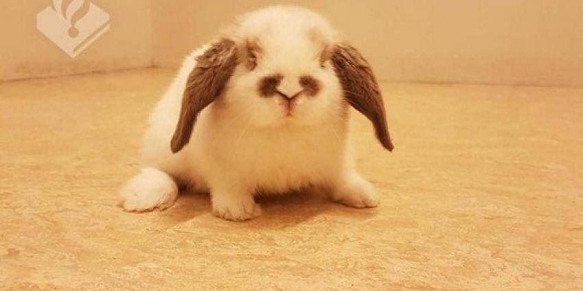 Politie Krimpenerwaard sluit konijn op in politiecel