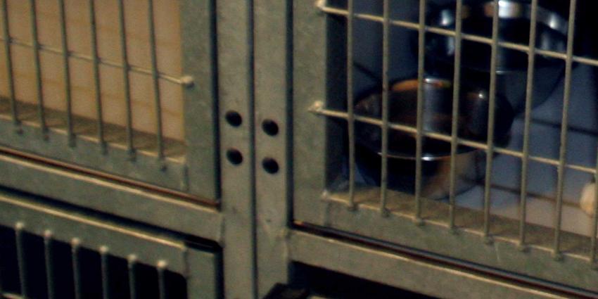 Rechter tikt NVWA op vingers: neem undercoverbeelden mee in handhaving