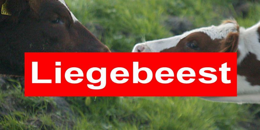 Albert Heijn, Jumbo, Campina, Rabobank en ECOstyle genomineerd als Liegebeest