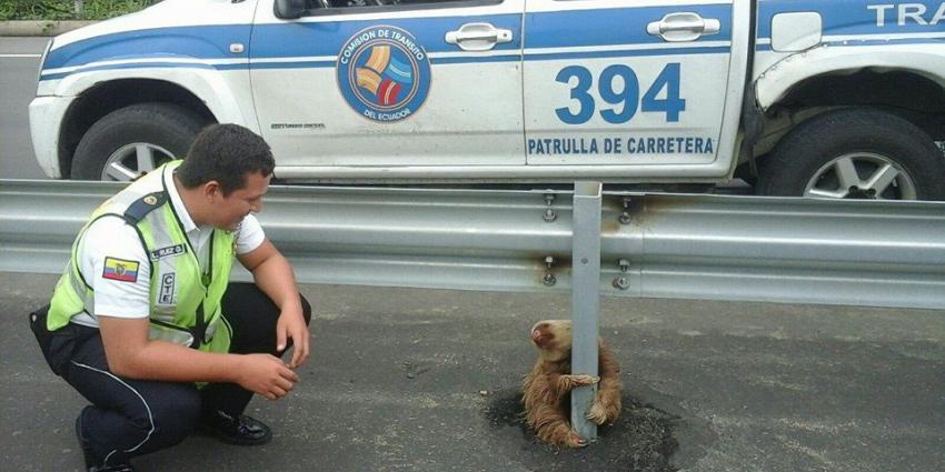 Bange luiaard gered op snelweg
