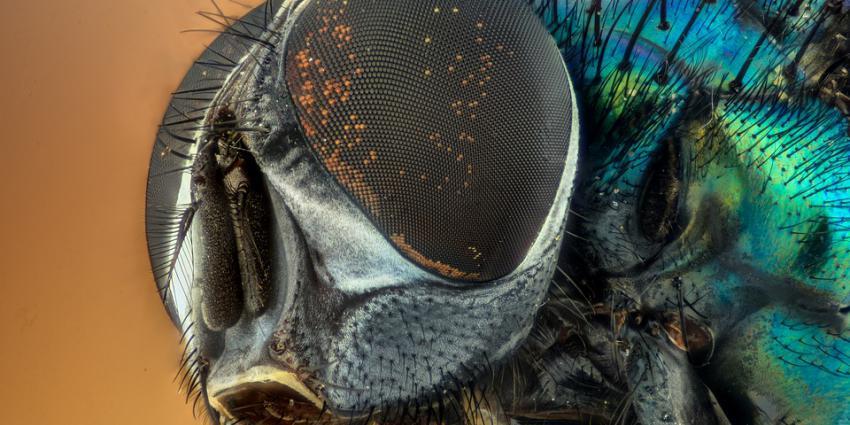 Veel nieuwe insecten gevonden in groeve