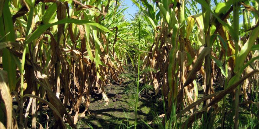 Aanhouding na vondst gestolen gereedschap in maisveld