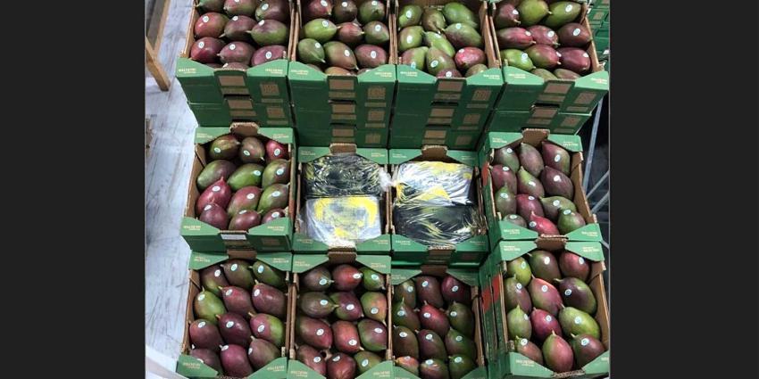Tussen mango's verstopte partij van 1500 kilo cocaïne onderschept