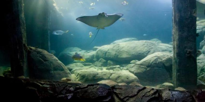 Burgers Zoo bouwt grootste overdekte mangrove van de wereld