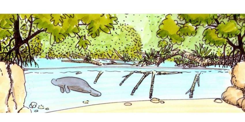 grootste overdekte mangrove ter wereld komt in arnhem blik op nieuws. Black Bedroom Furniture Sets. Home Design Ideas