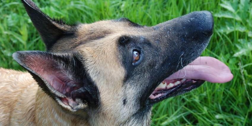 Agressieve hond in beslag genomen