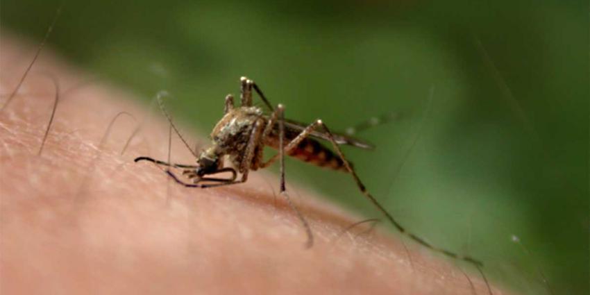 'Global Mosquito Alert' moet levens gaan redden