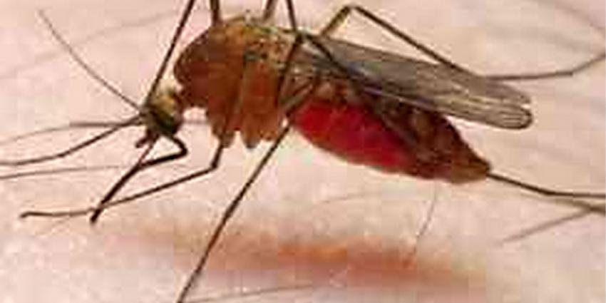 Diergeneesmiddel tegen teken en vlooien kan uitbraak van malaria en Zika bij mensen voorkomen