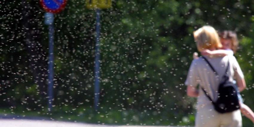 Steekmuggen veroorzaken grote uitbraak Westnijlkoorts in Zuid-Europa